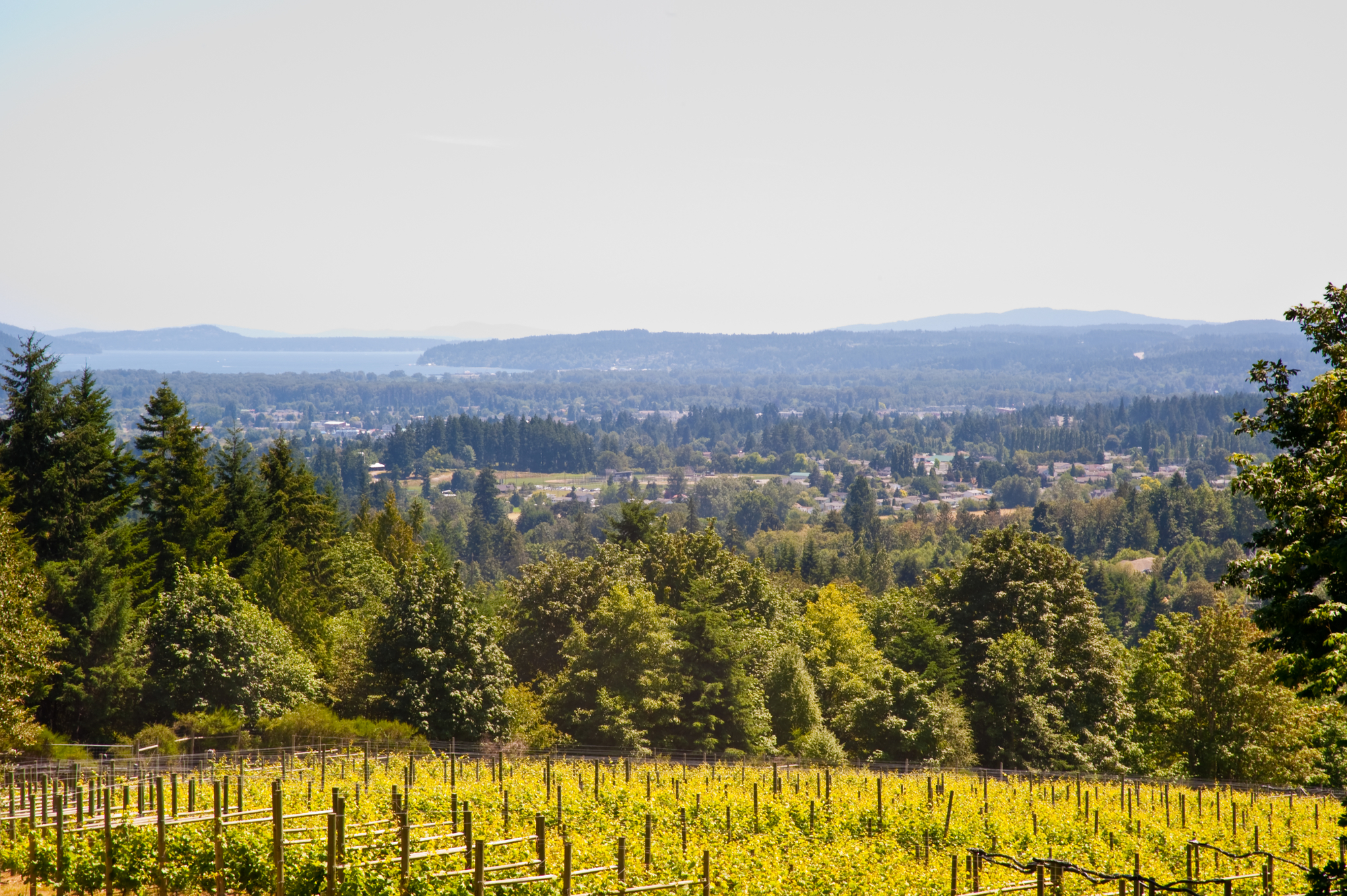 Where to Wine on Vancouver Island