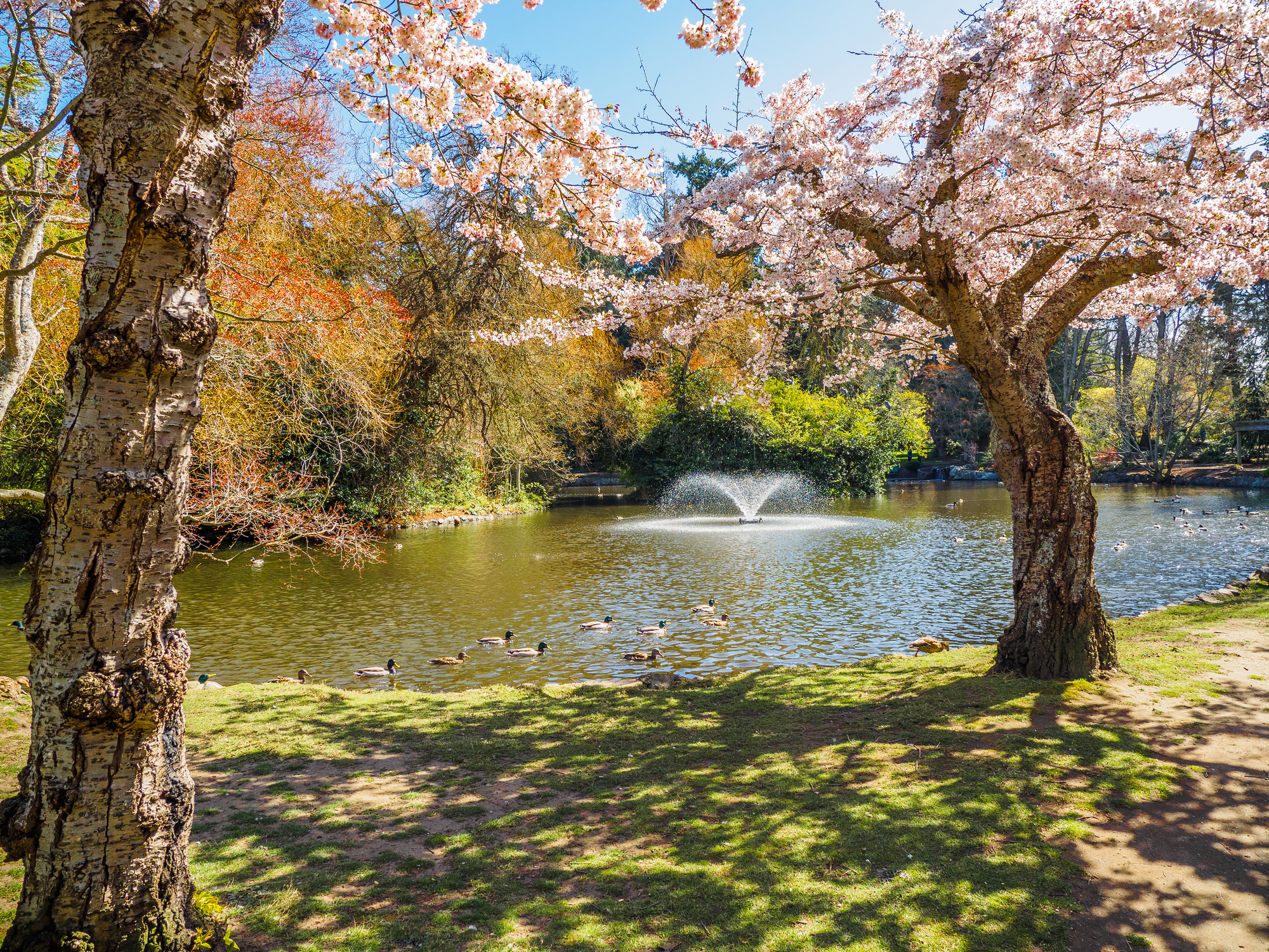 The Top 7 Things To Do in Beacon Hill Park