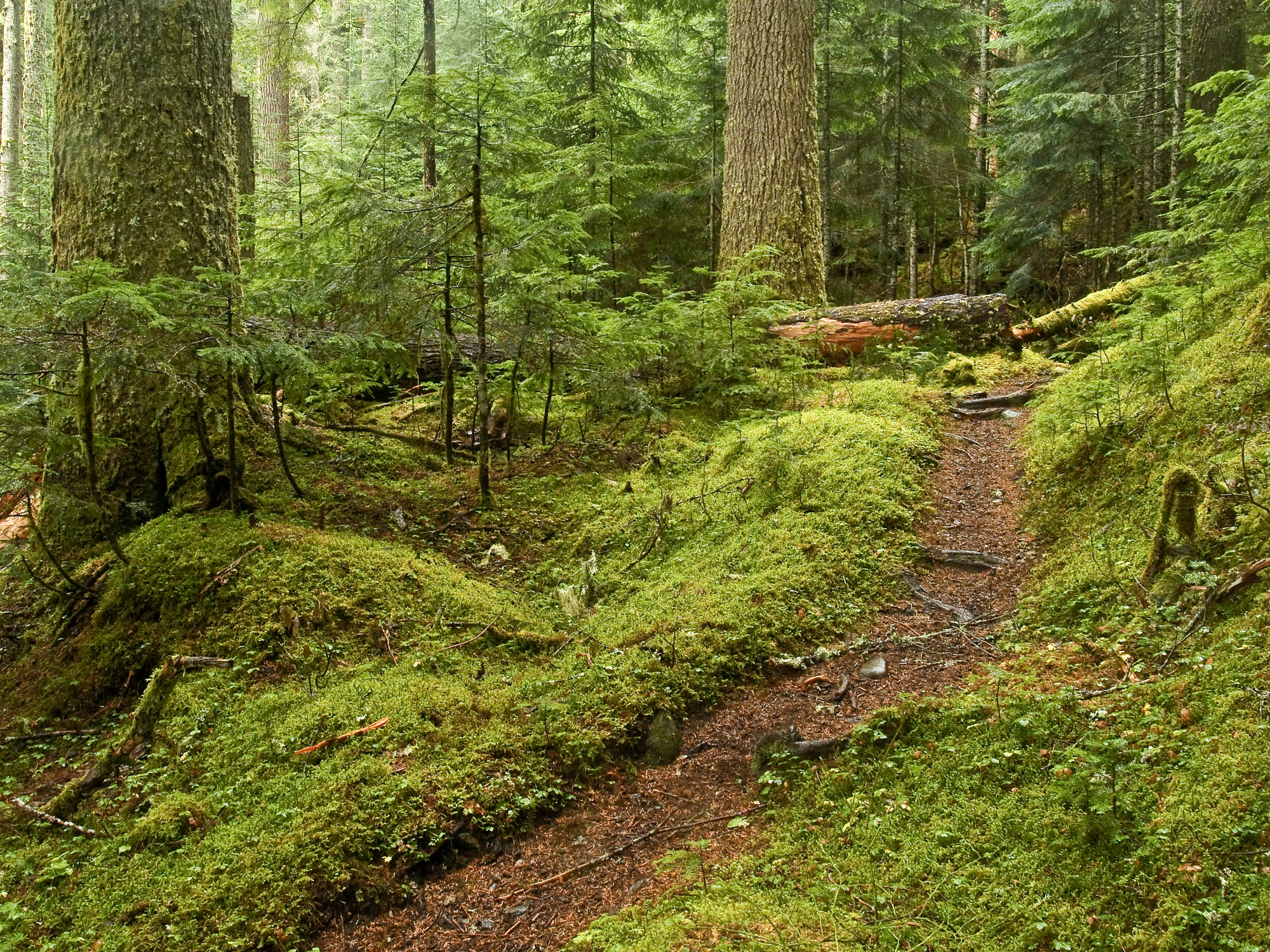 Forest Bathing: Bringing shinrin-yoku to British Columbia